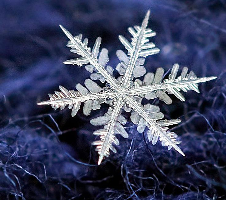 Snowflake Photos Frosted Flakes Micro Photography Winter