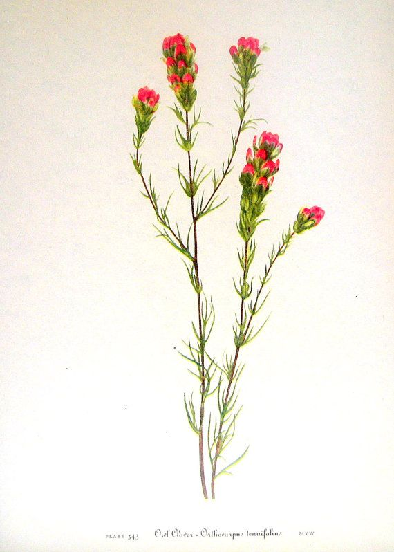 Lupine And Indian Paint Brush Tattoo