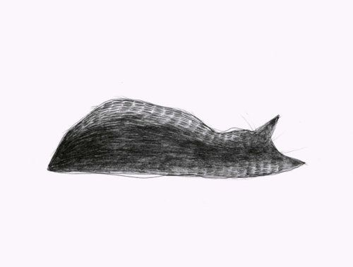 Sleeping cat by Sue Blanchard