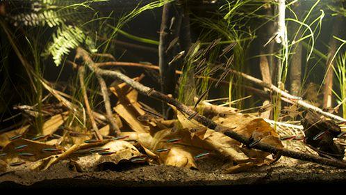 CREATING A BIOTOPE AQUARIUM | Home aquarium tips | Explore Fluval