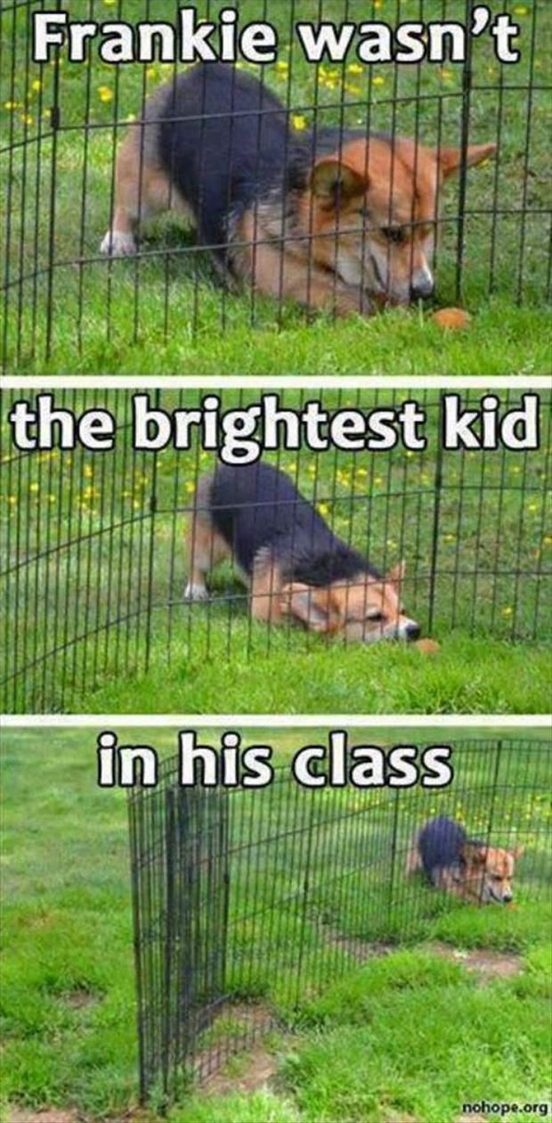 """This is that dog all the other dogs see coming and are like, """"Oh boy. Here he comes again."""" 
