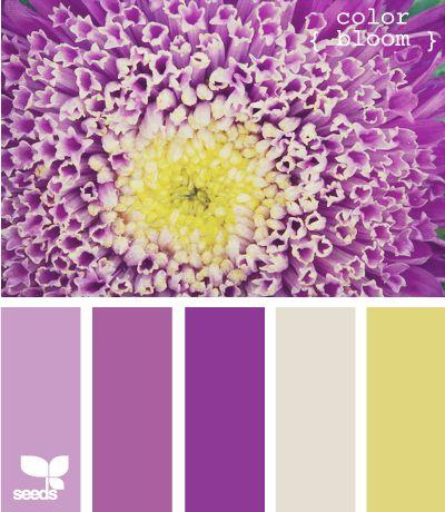 Colors That Match