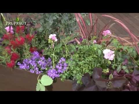 Les 25 meilleures id es de la cat gorie jardin en plein for Plantes jardiniere plein soleil