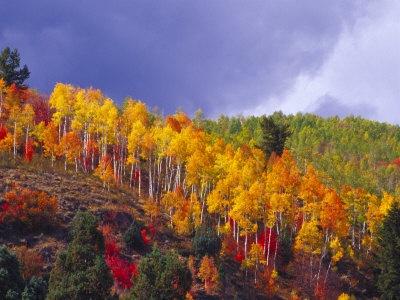 Sardine Canyon (between Brigham City and Logan, Utah).