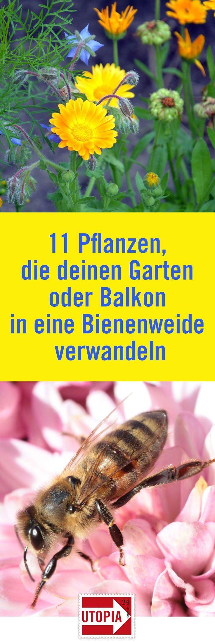 Bienenweide: 11 Pflanzen, die Ihren Garten oder Balkon zu einem Paradies für Bienen machen