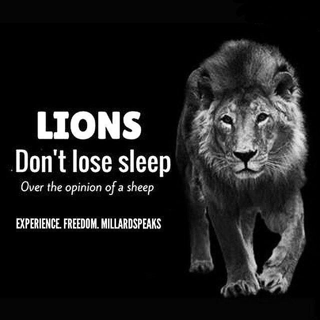 Lions Don T Lose Sleep Over The Opinion Of Sleep Lions Dont