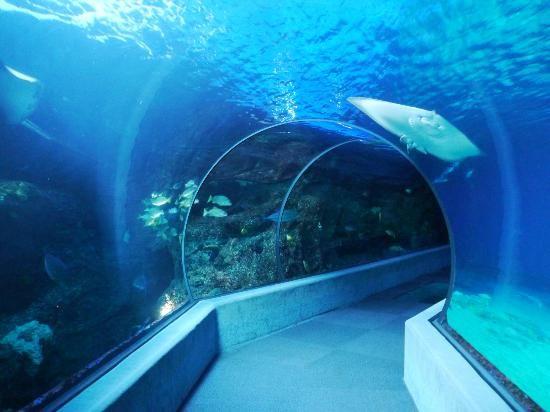 Maui Ocean Center: Underwater tunnel