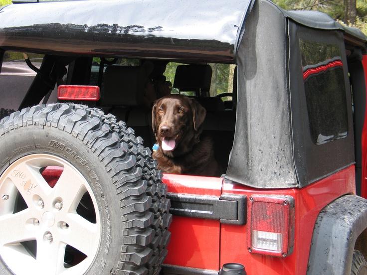 Kajo on an outing.: Blue Jeep, Chocolate Labs