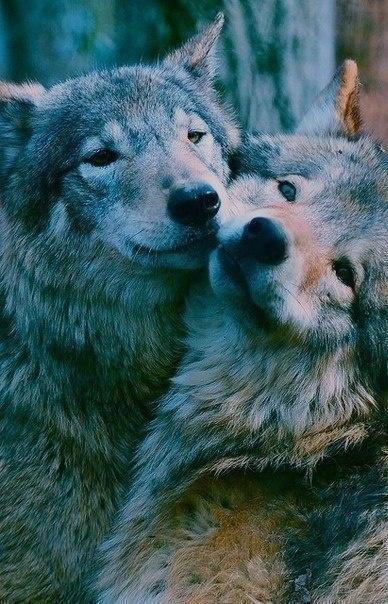 Me and my boyfriend Wolfy