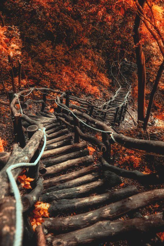 Path | 道路 | Chemin | путь | Sentiero | Camino | Dōro | Pasaje | проезд | The Serpentine Path