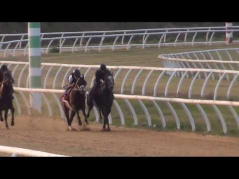 Classic Empire's 'Spectacular' Work Gives Casse 'Chills' - Horse Racing News   Paulick Report