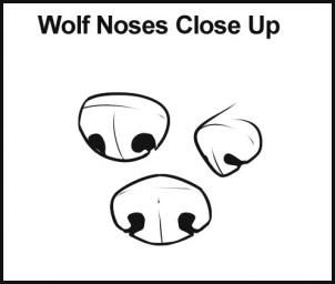 How to draw wolves. STEP 4 Here are some different types of noses that you may want to choose for your wolf drawing. There is front view, 3/4 view, and side view.