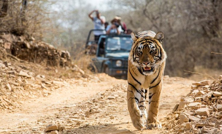 The Best Wildlife Sanctuaries in India   #travel #vacations #trip #summer #destinations #adventure #holidays #special_offers #flights #flying #familytrip #tourism #familyholidays #India #travelblog #traveldiaries #blog #london #cheap_tickets #BandipurNationalPark #uk #directflights #JimCorbettPark #KazirangaNationalPark #Indiatour #Safari #travelwideflights #hashtags  Call For Booking: 0208-090-2294