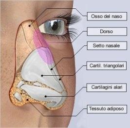 Chirurgia estetica del naso per correggere gli inestetismi e la simmetria nasale.