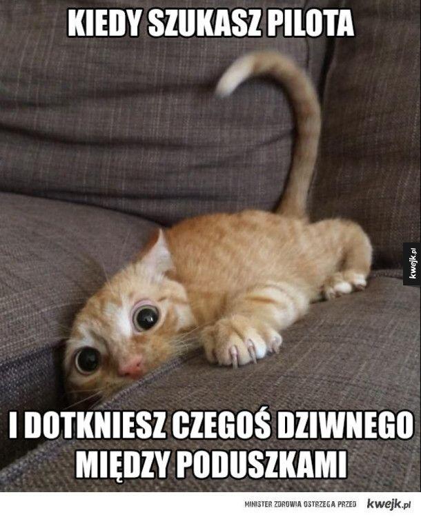 ten straszny uczuć #kwejk #humor #mem