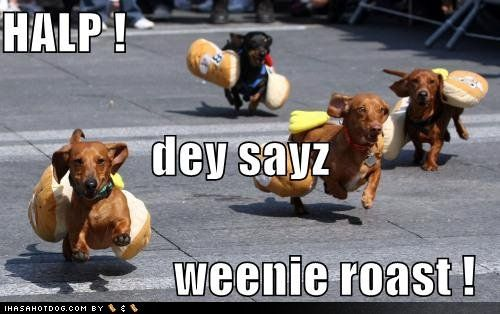 dachshund: Weenie Dogs, Dachshund, Dogs Racing, Doxie, Funny Dogs Pictures, Weiner Dogs, Wiener Dogs, Hot Dogs, Animal