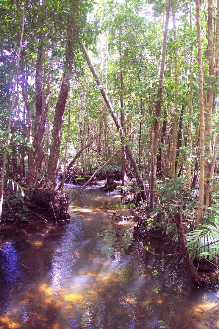 Palm Creek - Holmes Jungle Nature Park