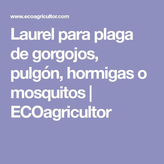 Laurel para plaga de gorgojos, pulgón, hormigas o mosquitos | ECOagricultor
