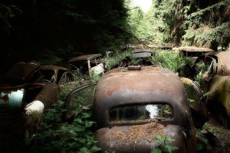 Впечатляющее автомобильное кладбище в сосновом лесу в маленькой деревне в Бельгии. По слухам, эти автомобили принадлежали американским солдатам, которые оставили их после Второй мировой войны. (Фото: Винсент Янсен)
