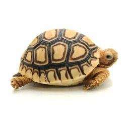 My son has been wanting a tortoise as a pet for quite some time now. Since his birthday is coming up, I have been looking at different tortoises for sale. I think something like this would be what he would like. It is cute and could be a good buddy for my son.