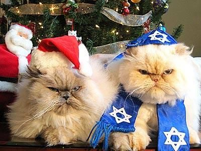 Superior Merry Christmas Or Happy Hanukkah   Hopefully You Enjoy Your Holiday More  Than These 2 Grumpy