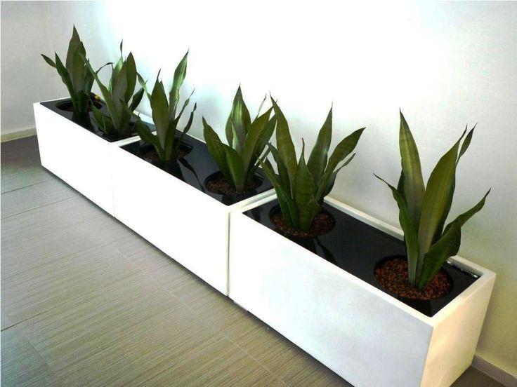 Best 25+ Large Indoor Planters Ideas On Pinterest