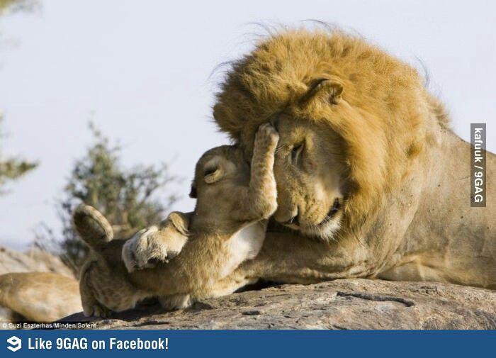 Lions :3