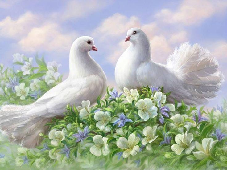 половые открытки два голубя малосемянная