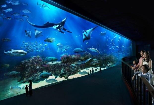 Fica numa ilha-resort de luxo e não se limita a ser o novo maior oceanário do mundo: o Southeast Asia Aquarium integra-se no Marine Life Park e vem com parque de diversões acoplado. É até possível dormir em suite com janela subaquática. É o novo luxo de Singapura.