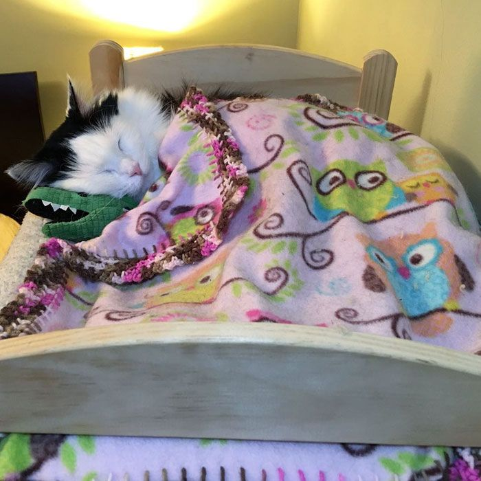 Cat Rescued From Terrible Conditions Now Sleeps In Her Tiny Doll Bed Each And Every Night