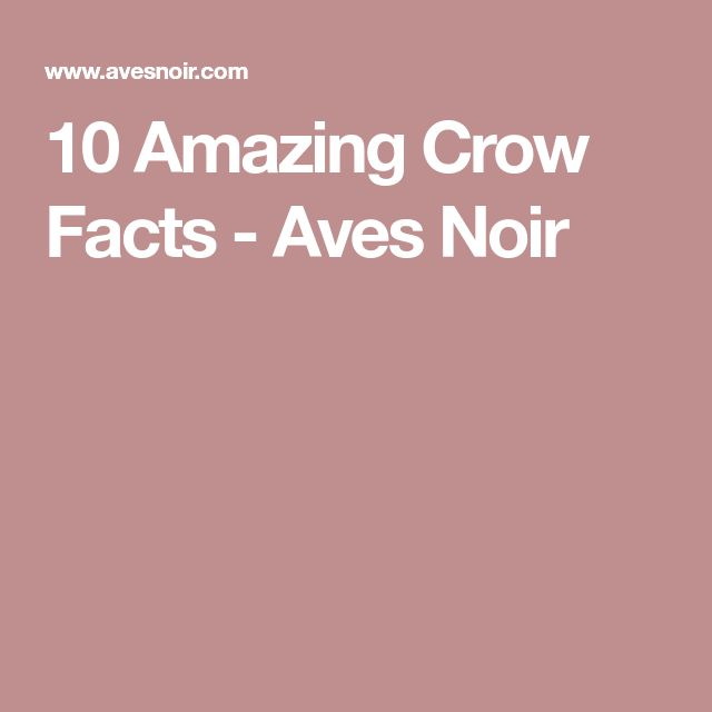 10 Amazing Crow Facts - Aves Noir