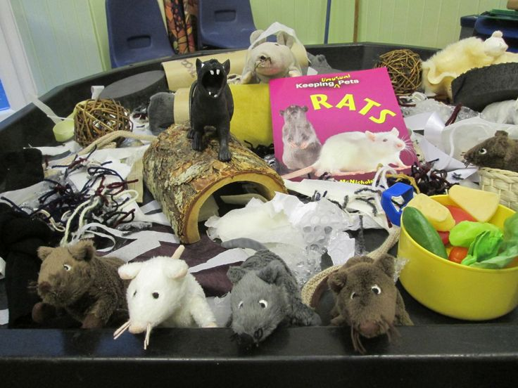 Sensory Table For Pets Week Lots Of Ikea Rats And Mice -4062