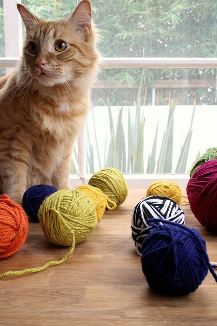 yarn catnip toys | joy the baker by joy the baker, via Flickr @Canice Viazanko @Alicia Carnahan