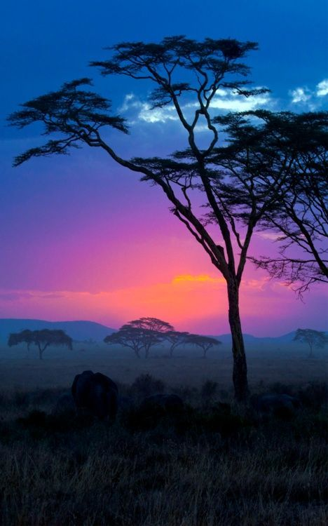 Im pretty sure this tree has been in EVERY picture of africa.