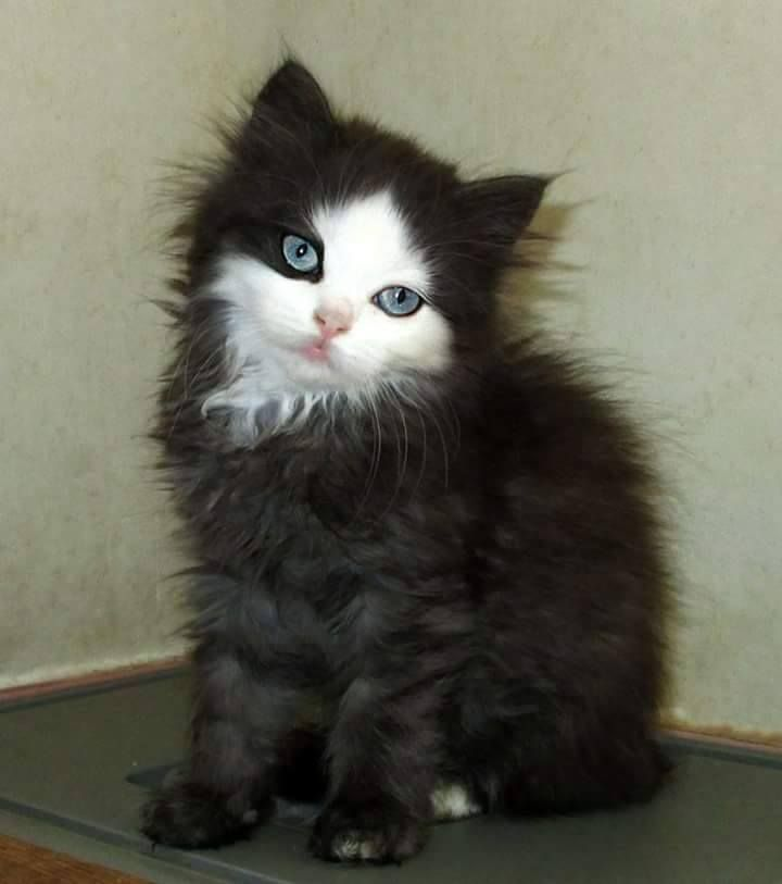 This kitten has an eyeliner game on sharper point than anything I've ever done in my life.