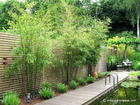 Schöne Sichtschutz Pflanzen Sichtschutz Pflanzen Garten tolle ...