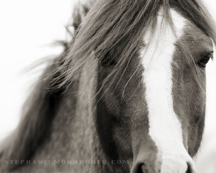 Horse Photography, black and white horse photography, fine art equine photography, Horse Poster, Horse Picture by stephaniemoon on Etsy https://www.etsy.com/listing/113654095/horse-photography-black-and-white-horse