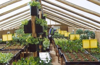 Heating Greenhouses Without Electricity! Underground wilapini design info for year long veggies.