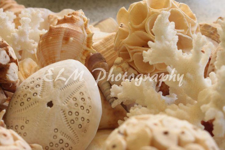 Pastel Shells http://elmphotographydesigns.bigcartel.com/product/pastel-shells