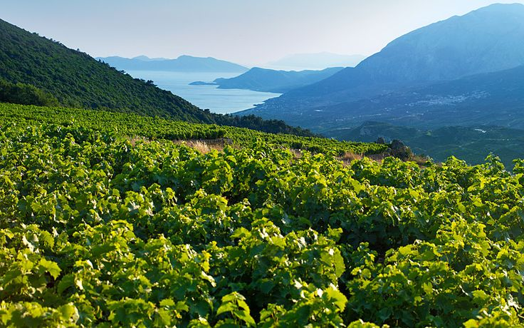 Wine Producers of the Archipelago - Greece Is