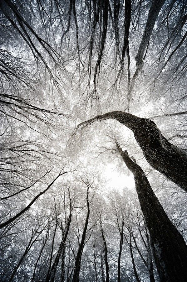 drxgonfly:  Winter Tree (by S.Y. BAE)