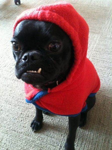 Stupid Dogs Red Riding Hood Song