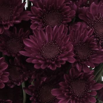 247 Best Color Plum Ciruela Images On Pinterest