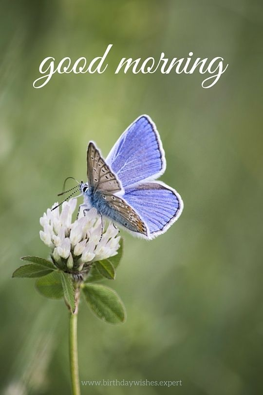 good morning image with white flower and butterfly