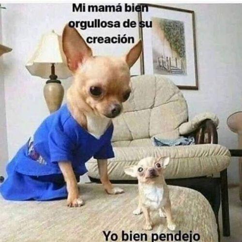 Perros Graciosos Http Enviarpostales Es Perros Graciosos 291 Perros Animales Cute Memes Animal Memes Funny Spanish Memes
