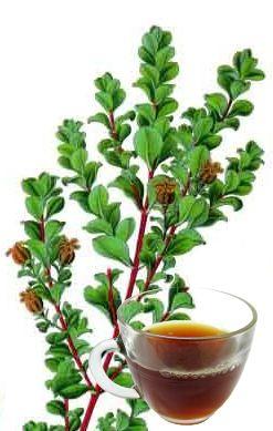 The Health Benefits of Buchu Tea