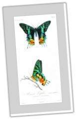Free Botanical Printables