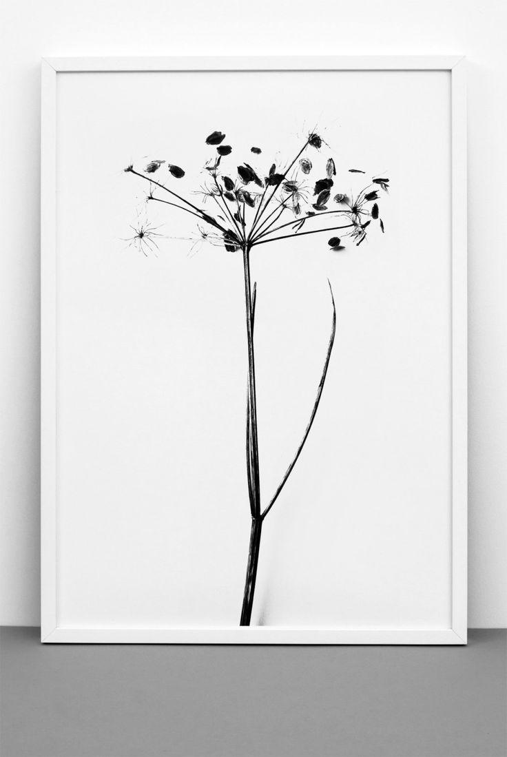 Plant hogweed print , Black & white art, Romantic poster, Scandinavian, Photographic art, Wedding, Anniversary by Onemustdash on Etsy