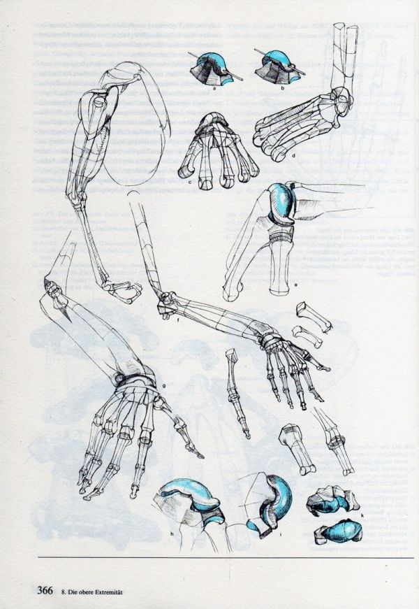 24 best Bammes images on Pinterest | Anatomy reference, Human ...