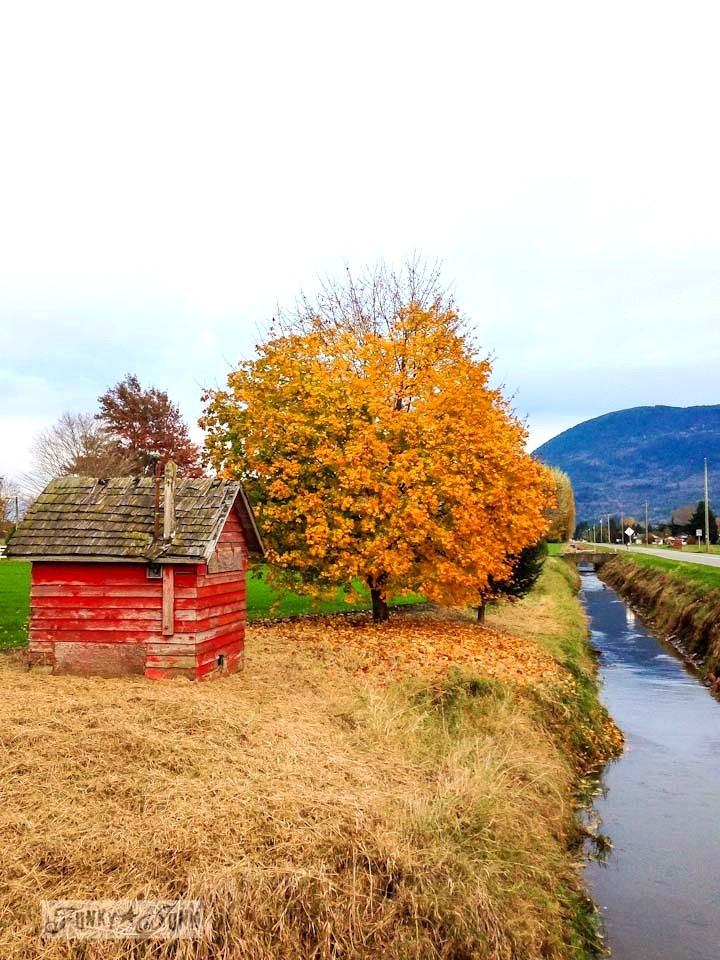 Little red shed by a creek / Fall trees up a mountain road / Fall walking up Majuba Hill via http://www.funkyjunkinteriors.net/